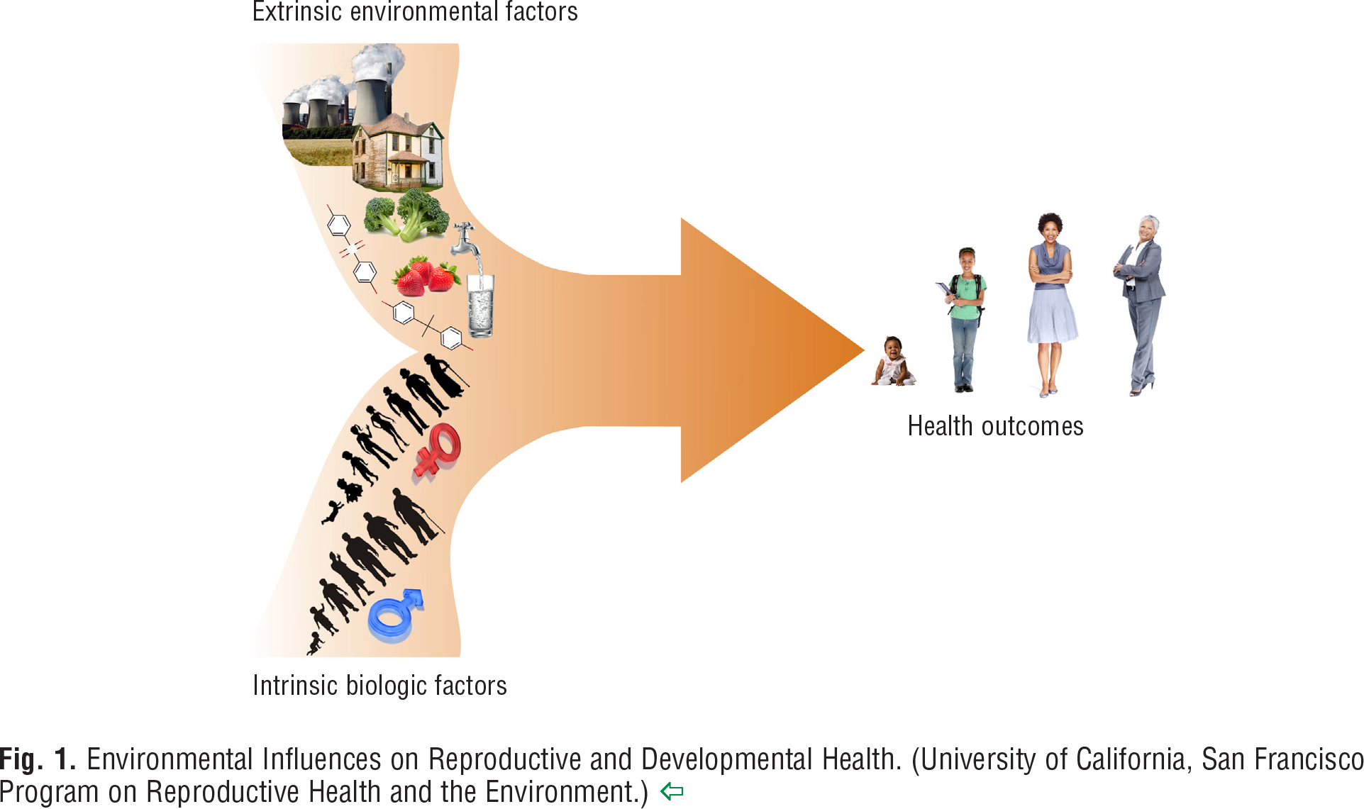 Fig. 1 Environmental Influences on Reproductive and Developmental Health. (University of California, San Francisco Program on Reproductive Health and the Environment.)
