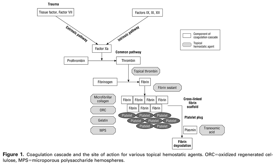 Figure 1. Coagulation cascade and the site of action for various topical hemostatic agents. ORC=oxidized regenerated cellulose, MPS=microporous polysaccharide hemospheres.
